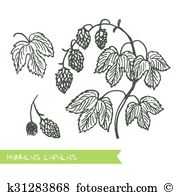 Lupulus Clipart Royalty Free. 28 lupulus clip art vector EPS.