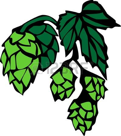 58 Humulus Lupulus Stock Vector Illustration And Royalty Free.