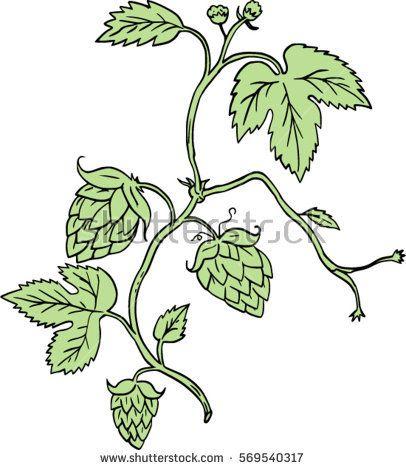 1000+ ideas about Hops Plant on Pinterest.