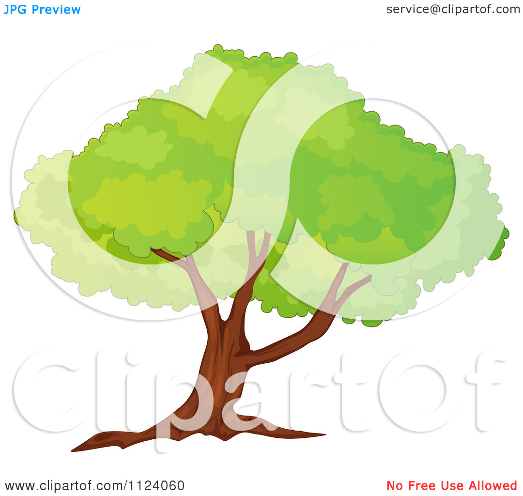 Clipart Of A Mature Tree With A Lush Canopy 1.