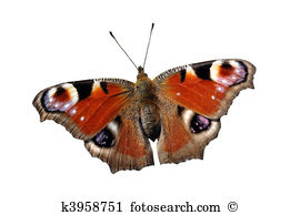 Lycaenidae Stock Illustrations. 23 lycaenidae clip art images and.
