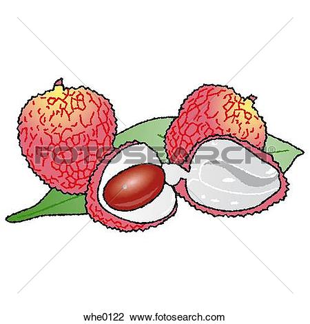 Lychee Illustrations and Clip Art. 15 lychee royalty free.