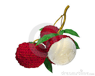 Lychee Stock Illustrations.