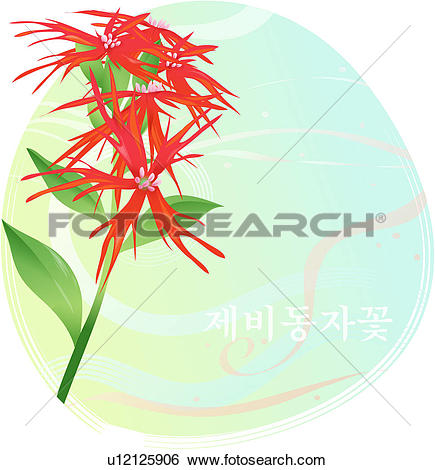 Clip Art of flowers, lychnis wilfordii, flower, plants, plant.