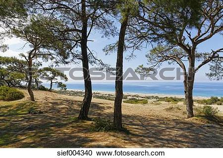 Stock Photography of Turkey, Lycia, Pine trees on sand dunes near.