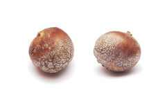 Lycoperdon Utriforme Stock Photo.