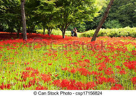 Stock Photo of Temples in South Korea,bulgapsa, Lycoris.