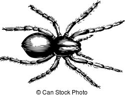 Lycosidae Illustrations and Clipart. 13 Lycosidae royalty free.