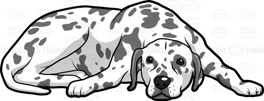 An Adult Dog With Spots Lying Down On The Floor To Get Some Rest.