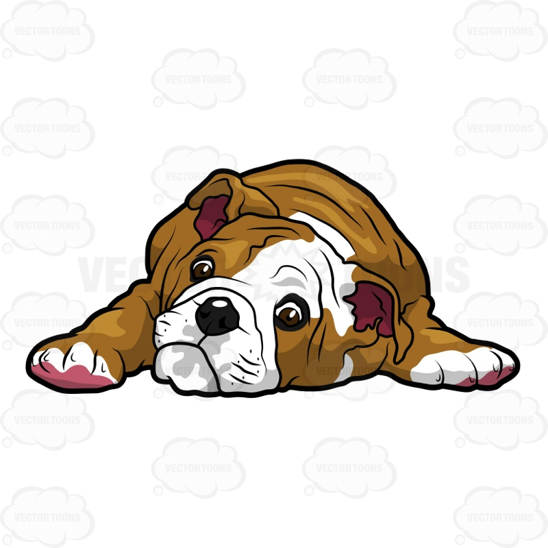English Bulldog Puppy Lying Down With Its Head On The Floor.