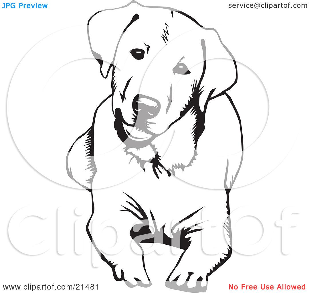 Clipart Illustration of a Cute And Curious Labrador Retriever Dog.