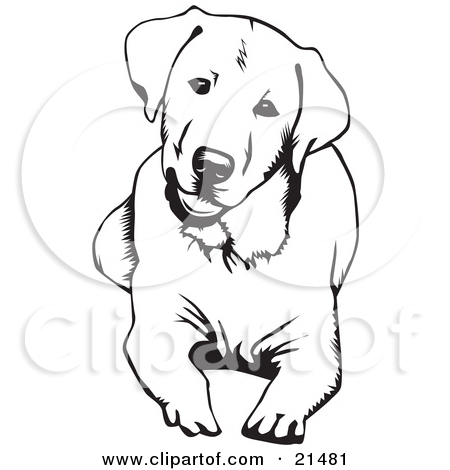 Clipart Illustration of a Cute And Curious Labrador Retriever Dog.