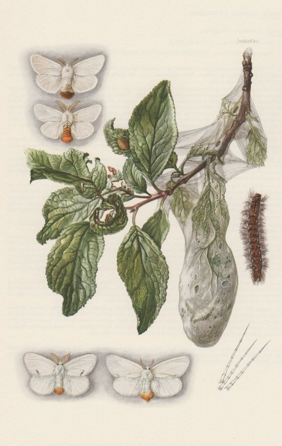 1000+ images about vintage insect prints on Pinterest.