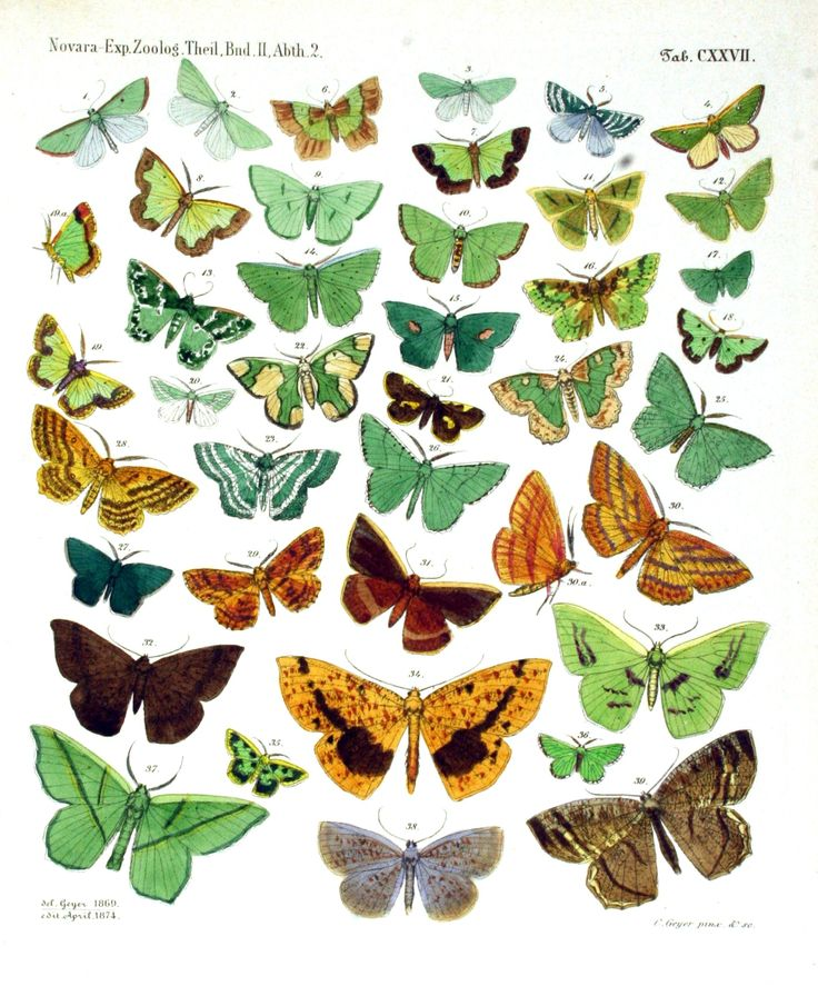 1000+ images about mariposas, butterflies, papillons on.