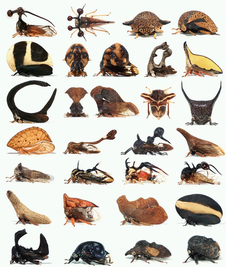 1000+ images about BUGS on Pinterest.