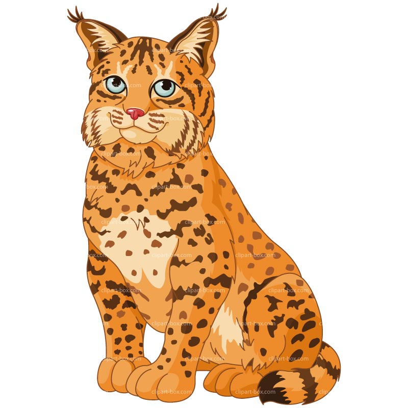Cute lynx clipart.