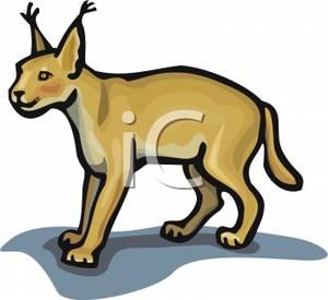 Lynx Cat.