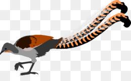 Lyrebird PNG and Lyrebird Transparent Clipart Free Download..