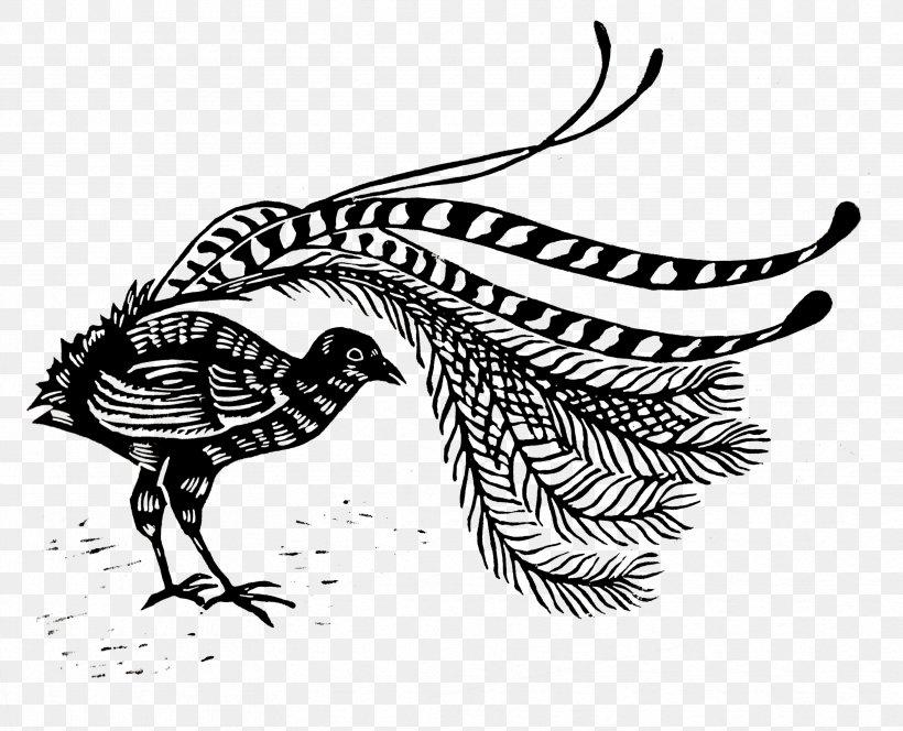 Lyrebird Line Art Beak Drawing Clip Art, PNG, 3328x2696px.