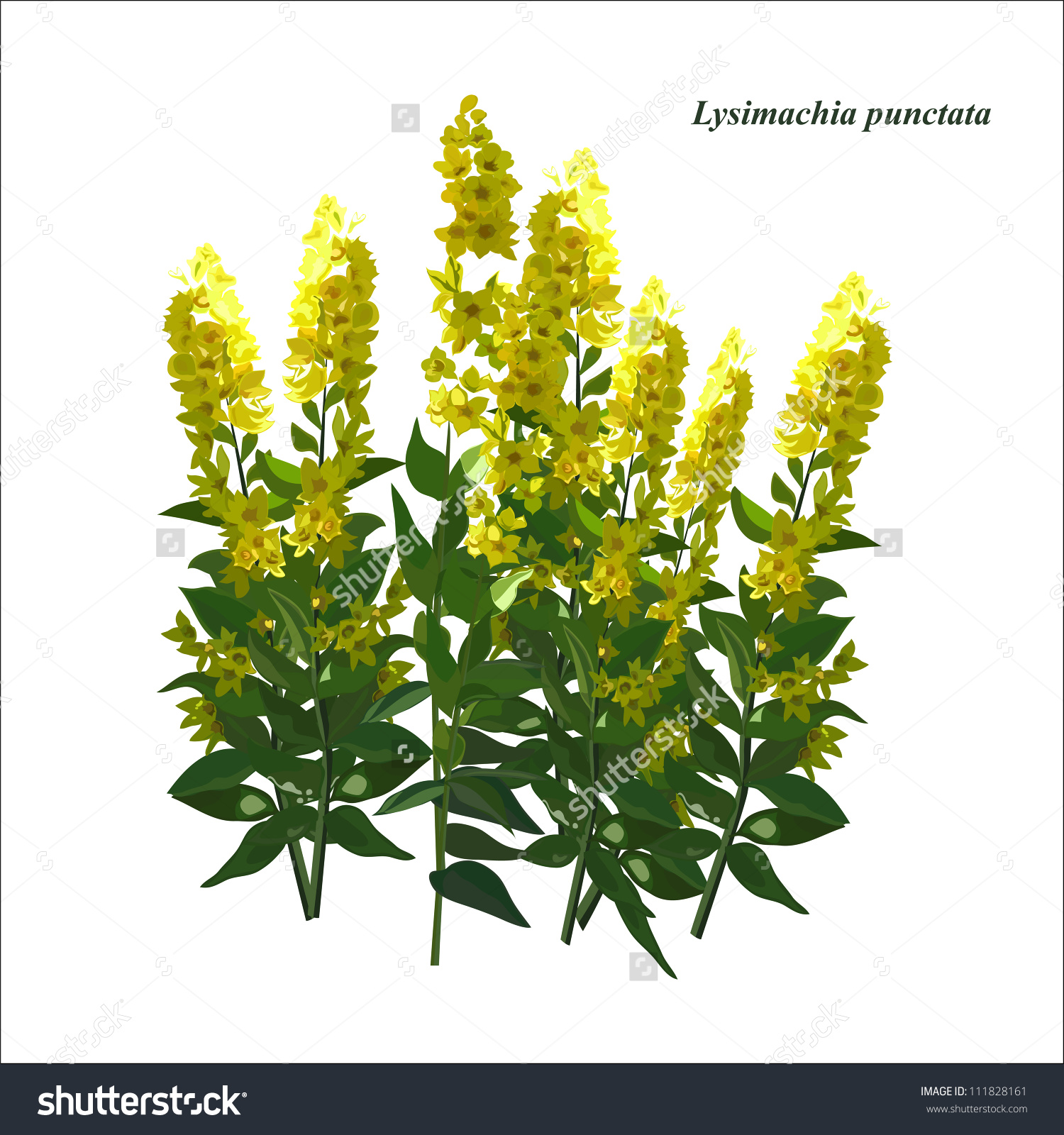 Bright Yellow Flower Design Plant Flower Stock Vector 111828161.