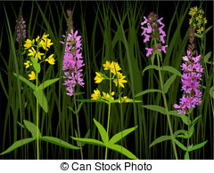 Lythrum salicaria Clip Art and Stock Illustrations. 9 Lythrum.