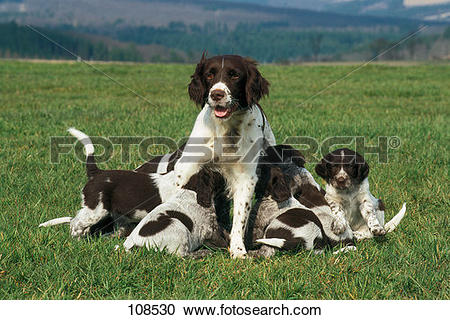 Stock Photography of dog, small.