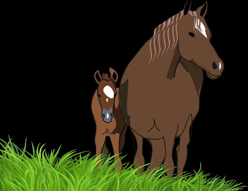Clipart mare free.
