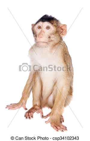 Stock Photo of Juvenile Pig.