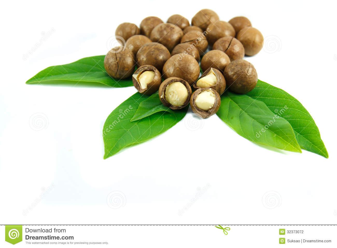 Macadamia Nuts Stock Photography.