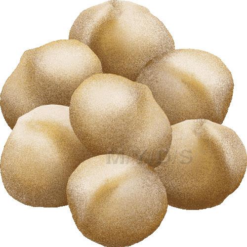 Macadamia Nut clipart / Free clip art.