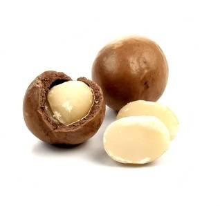 Macadamia nuts clipart.