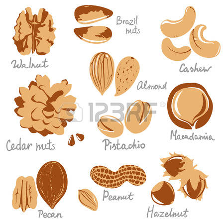 314 Macadamia Nut Stock Vector Illustration And Royalty Free.