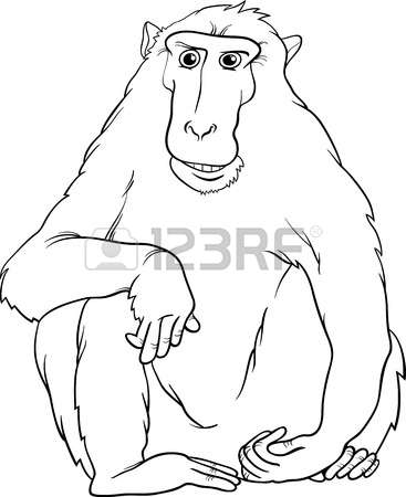 1,029 Macaque Stock Illustrations, Cliparts And Royalty Free.