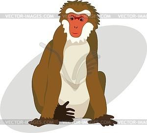macaque.