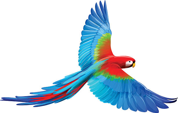 Best Blue Macaw Illustrations, Royalty.