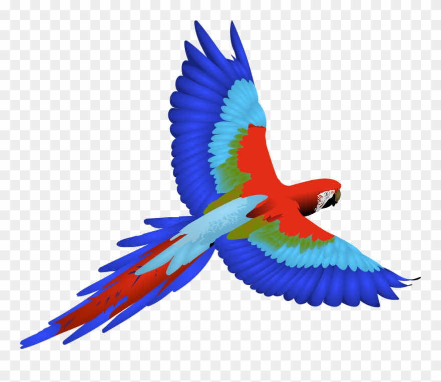 Parrot Clip Art Cartoon Bclipart Free Images.