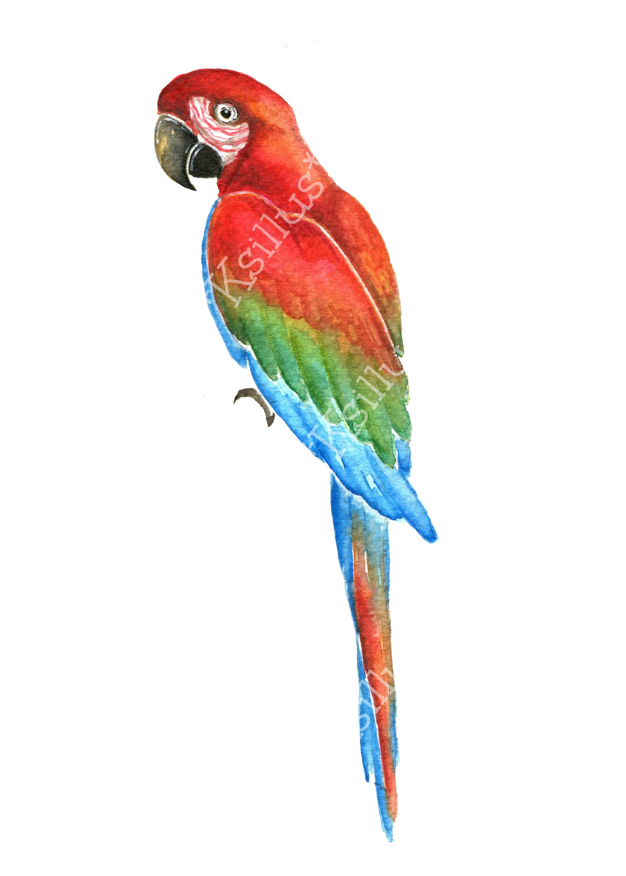 Parrots clipart Tropical clipart tropical pattern.