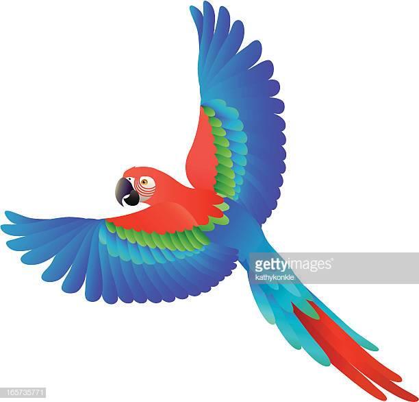 46 Scarlet Macaw Stock Illustrations, Clip art, Cartoons.