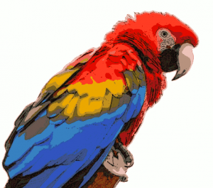 Macaw Clip Art Download.