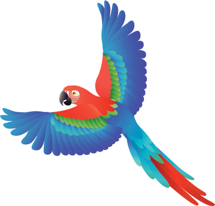 Cute animal clipart macaw.