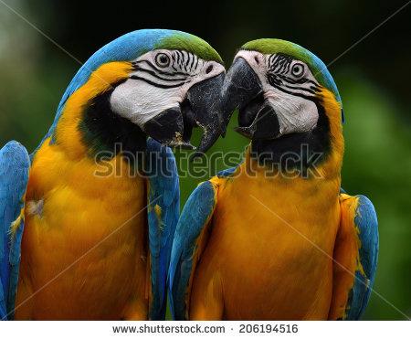 Romantic Macaw Stock Photos, Royalty.