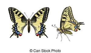 Papilio machaon Stock Illustrations. 49 Papilio machaon clip art.