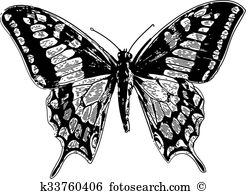 Machaon Clipart EPS Images. 37 machaon clip art vector.
