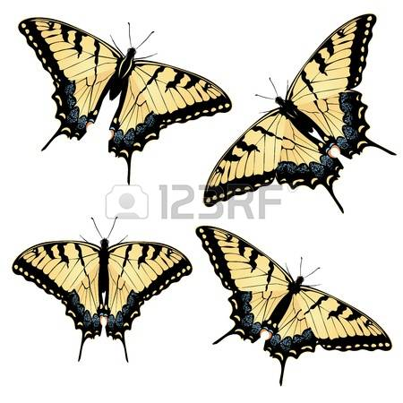 137 Machaon Cliparts, Stock Vector And Royalty Free Machaon.