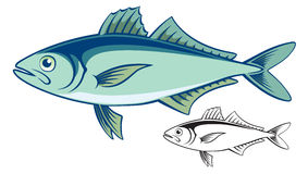 Trevally Stock Illustrations.
