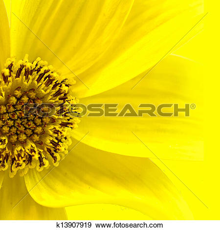 Stock Illustration of Daisy Illustration (Macro) k13907919.