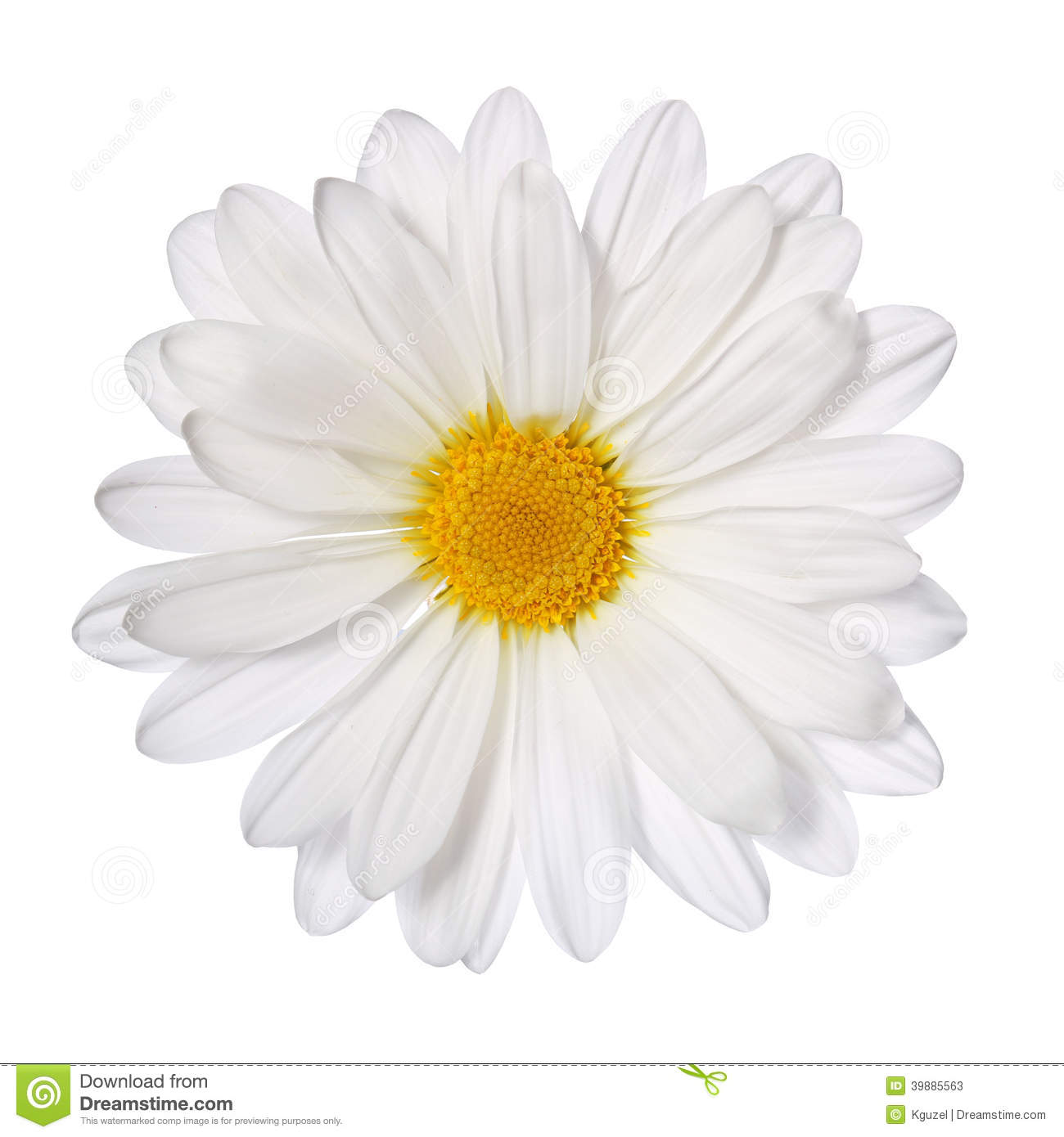 Daisy Stock Photos, Images, & Pictures.