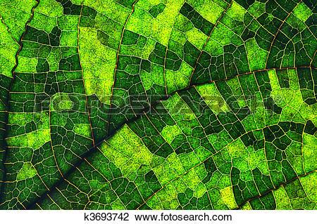 Clip Art of Macro of a leaf k3693742.