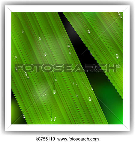 Clip Art of Macro Leaf with droplets k8755119.