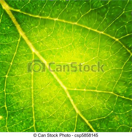Clipart Vector of Macro leaf. Vector Illustration csp5858145.